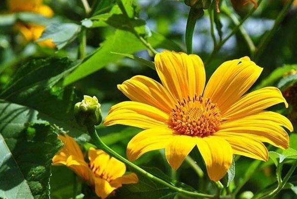 Hoa da quy (5)