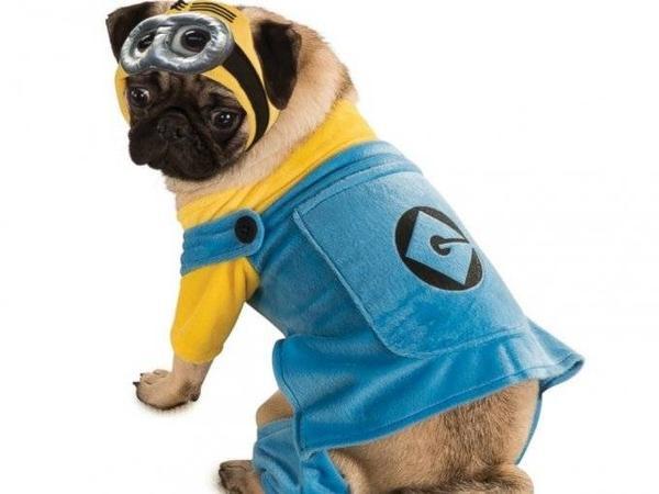 Đến cả chó cưng cũng theo trào lưu hóa trang Minions.