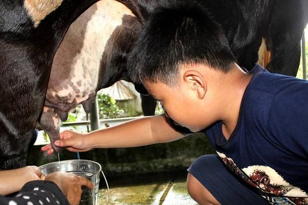 Trang trại luôn bố trí các nhân viên am hiểu về việc chăn nuôi từng loại gia súc để hướng dẫn khách tận tay thực hiện các công đoạn.