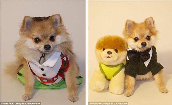 Chú chó Chewy làm dáng trước ống kính mặc một bộ áo len thắc cà vạt bên cạnh một chú chó nhồi bông.