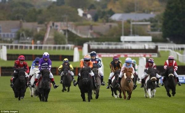 đua ngựa lùn ở Anh (5)