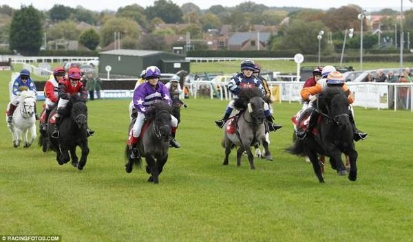 đua ngựa lùn ở Anh (8)