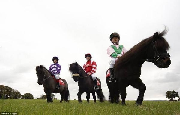 đua ngựa lùn ở Anh (9)