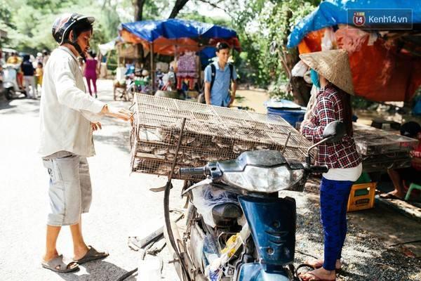 Sau khi bắt được chuột, thương lái cho người vào tận đồng thu mua rồi chở về chợ.