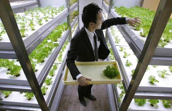 urbanfarm (12)