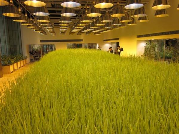 urbanfarm (6)