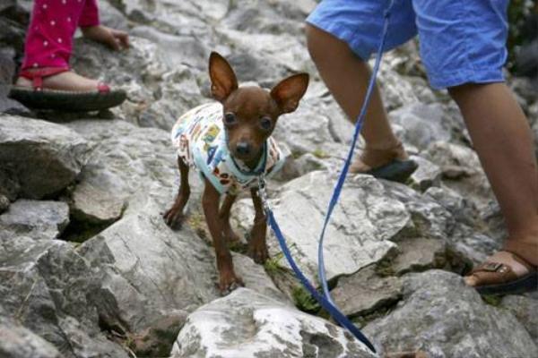 Chú chó được khoác thêm áo khi đi chơi cùng cậu chủ.