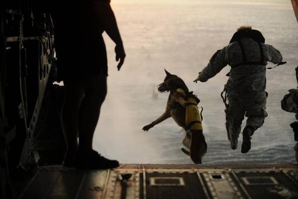 Một chiến sỹ nhảy trong Binh đoàn đặc nhiệm số 10 của Mỹ nhảy dù từ trực thăng cùng chó nghiệp vụ.
