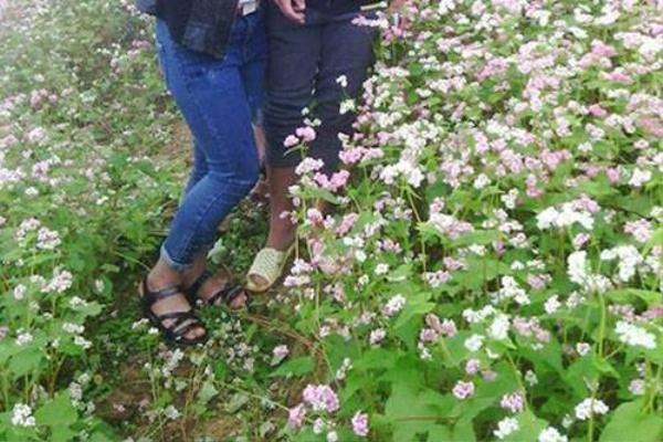 ... Và để có những bức ảnh như thế, các bạn sẵn sàng dẫm nát cảnh đồng hoa - Nguồn: FB.