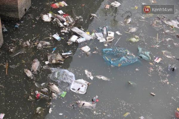 Lượng rác thải dày đặc là nguyên nhân gây ô nhiễm kênh Nhiêu Lộc. Cá bắt đầu chết dần hòa lẫn với rác thải gây mùi hôi thối cả một khúc kênh.