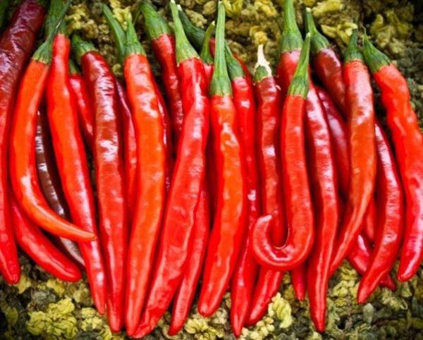 Ớt ngâm giấm sẽ giảm độ cay, ăn một ít ớt mỗi ngày tốt cho hệ tiêu hoá, lưu thông máu