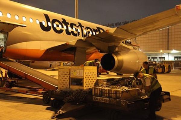 Đưa chim lên máy bay - Ảnh do Jetstar Pacific cung cấp.