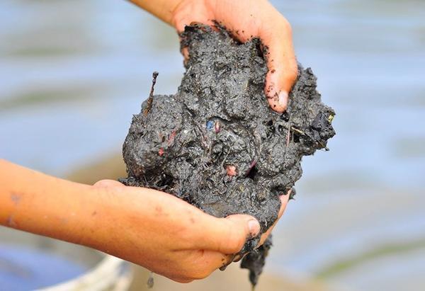 Sau khi đãi được trùn, ngư dân mang chúng đến bán cho những người nuôi cá lồng trên sông hoặc những người chơi cá cảnh. Mỗi lon trùn (vỏ lon sữa bò) đãi sạch đất có giá 8.000 - 9.000 đồng.