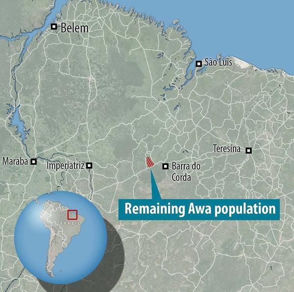 Khu vực sinh sống của người Awa bị thu hẹp lại rất nhỏ và môi trường sống bị ảnh hưởng nghiêm trọng do nạn chặt phá rừng bừa bãi.