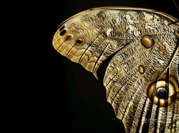Bức ảnh chụp chú bướm vô cùng sinh động được chụp vào ngày 13/3 tại San Diego, California, Mỹ.