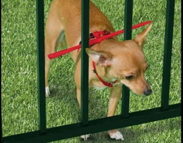 Dây xích chó kèm thanh chắn qua song cửa.