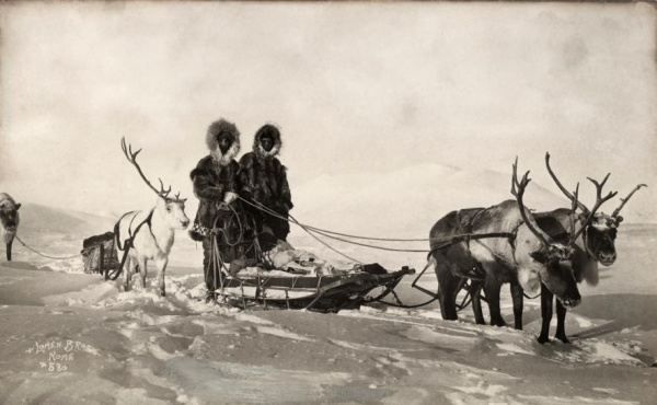 Tuần lộc kéo xe trượt tuyết tại Alaska. Ảnh được đăng trên tạp chí National Geographic vào năm 1919.