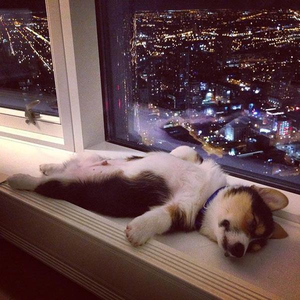 13. Tư thế ngủ đáng yêu của các chú chó