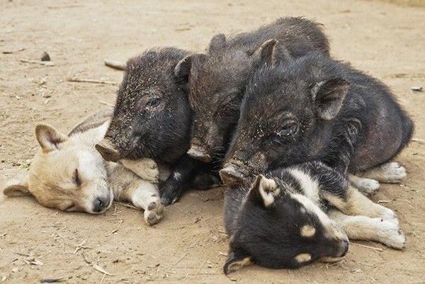 17. Tư thế ngủ đáng yêu của các chú chó