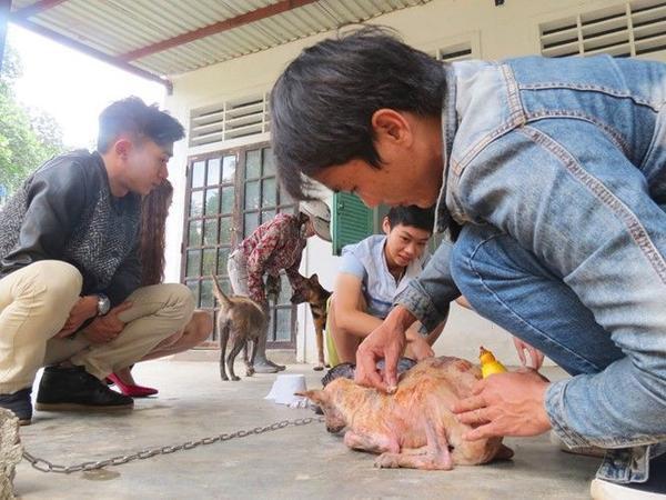 Những chú chó được chăm sóc cẩn thận bởi Trần Văn Sơn.