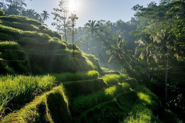 Ruộng bậc thang xanh mướt trong ánh mặt trời ở Bali, điểm tham quan nghỉ dưỡng nổi tiếng thế giới của Indonesia. Vùng đất này không chỉ có cảnh đẹp mà còn ghi điểm bởi nền văn hóa độc đáo, ẩm thực tươi ngon và các spa tuyệt hảo.