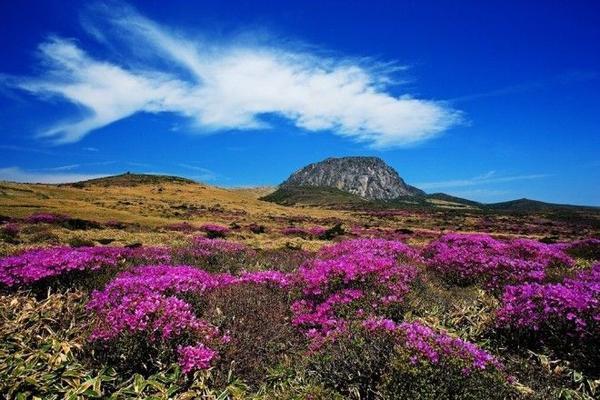 Một trong những điểm đến hấp dẫn ở đảo Jeju là Hallasan - ngọn núi cao nhất Hàn Quốc (1.950 m). Du khách có thể leo lên và xuống trong ngày nếu đi sớm. Hallasan là vùng dự trữ sinh quyển UNESCO, với một hồ miệng núi lửa, rừng thông, hệ động thực vật phong phú. Ảnh: Travelknots/Wordpress.