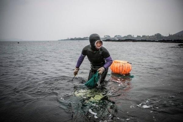 Những nữ thợ lặn lớn tuổi là một hình ảnh quen thuộc ở đảo Jeju. Họ có thể lặn sâu khoảng 10-20 m mà không cần bình khí hiện đại, bắt bạch tuộc, bào ngư, trai, mực và tìm rong biền. Độ tuổi trung bình của các nữ thợ lặn này là 65. Nhiều người 80 tuổi vẫn tiếp tục công việc này. Ảnh: Nytimes.