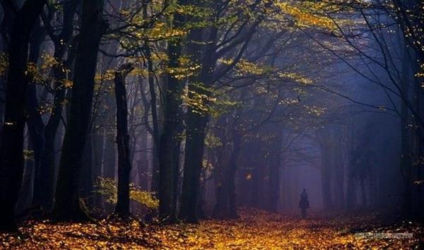 Giữa một rừng cây với sự pha trộn hoàn hảo của màu sắc lá cây, thấp thoáng trong đó còn có sự xuất hiện của con người.
