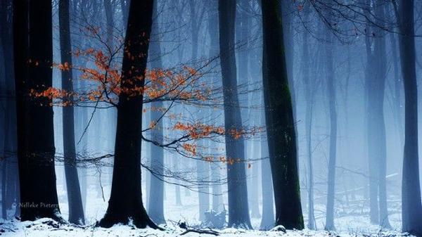 Đa số những hình ảnh được chụp trong rừng Veluwe, một trong những danh lam thắng cảnh nổi tiếng của Hà Lan.