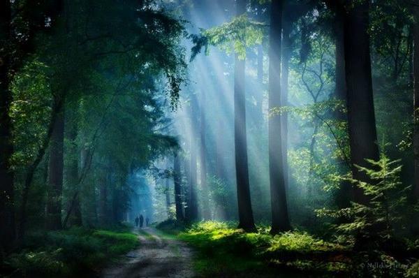 Ánh nắng ban mai chiếu rọi xuống rừng cây tạo nên một bức ảnh hoàn hảo.