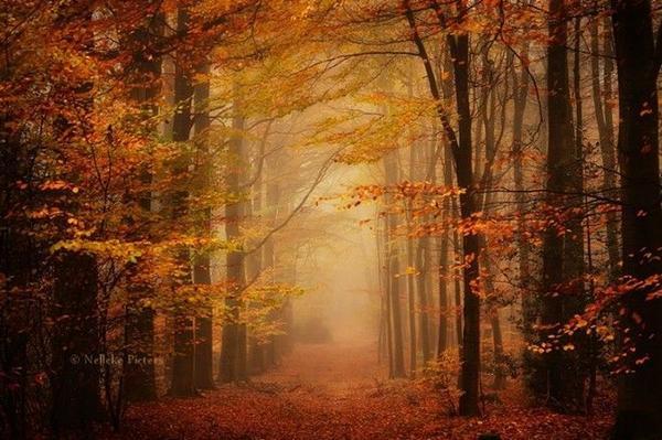 Mỗi mùa trong năm, khu rừng đều mang một vẻ đẹp riêng biệt.