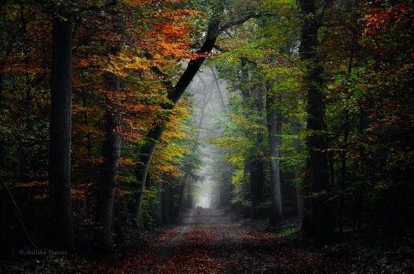 Rừng Veluwe là nơi có thảm thực vật đa dạng, một trong những khu bảo tồn thiên nhiên lớn nhất của Hà Lan.