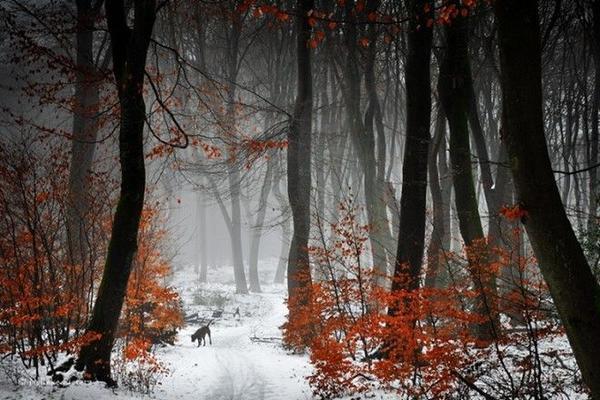 Thấp thoáng sau những rặng cây, sự xuất hiện của động vật hoang dã khiến cho bức ảnh thêm phần sống động.