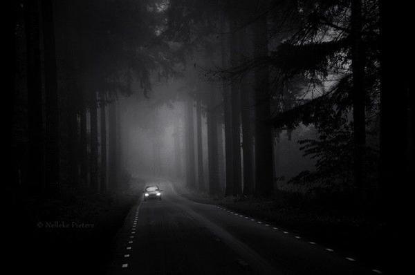 Đường cao tốc xuyên qua rừng cây.