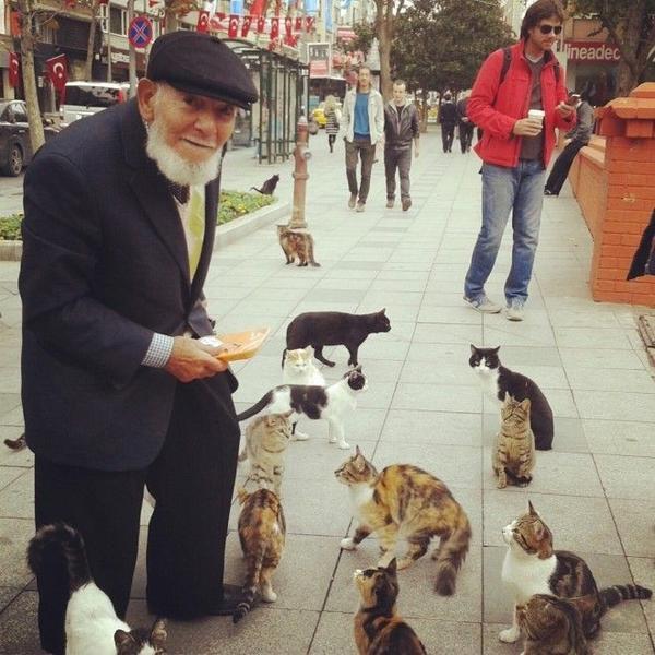 Các chú mèo đáng yêu quẩn chân một ông lão xin ăn.