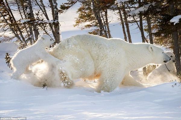 Hinh 2 polar