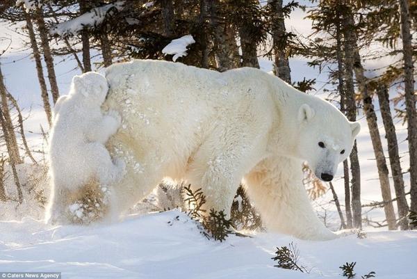 Hinh 4 polar