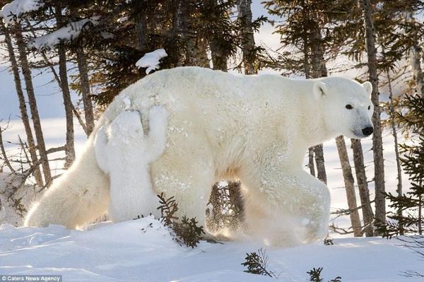 Hinh 5 polar