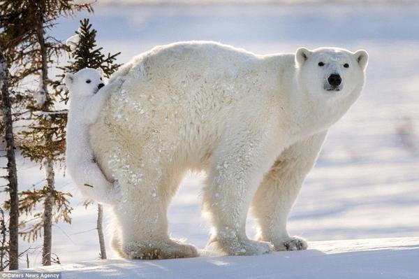 Hinh 6 polar