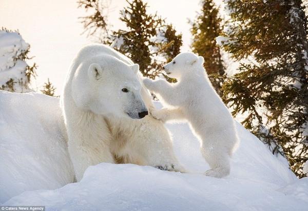 Hinh 7 polar