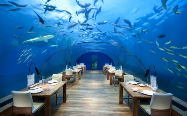 The interior of the Maldives' Ithaa Undersea Restaurant is exceptionally simple, which is understandable given the uninterrupted sea views offered by 270-degree transparent panelling. In the Conrad Maldives Resort & Spa, always popular with honeymooners, the restaurant is 16ft below the Indian Ocean surface and is positioned next to a coral reef