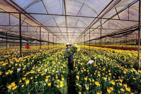 Đà Lạt còn được nhắc đến với làng hoa Thái Phiên nổi tiếng là đầu mối cung cấp hoa cho cả nước.