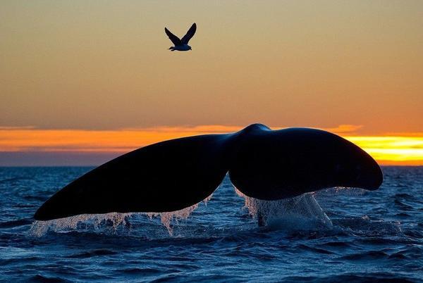 13whale