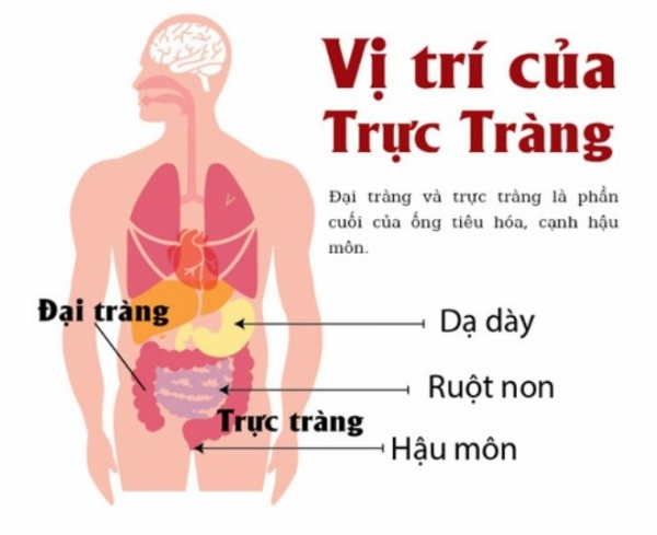 ungthutructrang5