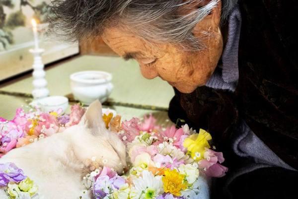 Fukumaru đã qua đời sau một thời gian dài chiến đấu với căn bệnh suy thận.