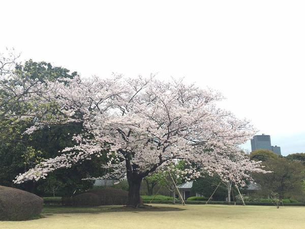 kimonoviet07