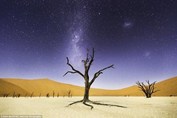 Cây lạc đà gai ở Deadvlei, Công viên Namib-Naukluft, Namibia dưới bầu trời đầy sao.