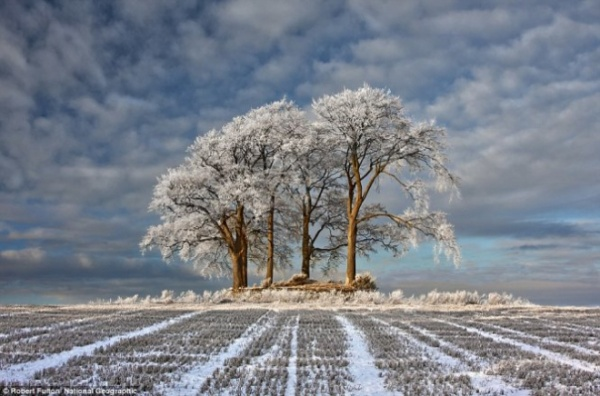 Cây cối trong tuyết trắng ở Stirlingshire, Scotland