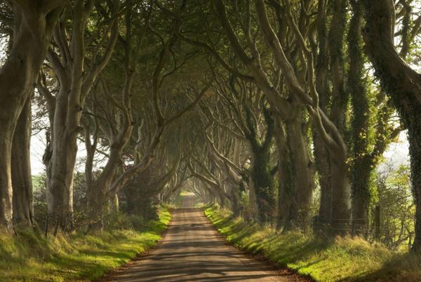 Dark Hedges (Bắc Ireland): Nổi tiếng với vẻ đẹp ma mị của hàng cây sồi cổ thụ được trồng từ thế kỷ thứ 18, con đường cây Dark Hedges thu hút hàng nghìn lượt khách đến tham quan mỗi năm. Ảnh: Flickr.
