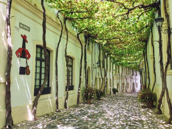 Jerez de la Frontera (Tây Ban Nha): Thành phố nổi tiếng với những loại rượu vang thượng hạng của xứ sở bò tót. Trong hình là một con đường ở trung tâm thành phố, được tô điểm bằng những cây nho trồng dọc hai bên đường. Ảnh: Viachesiva.